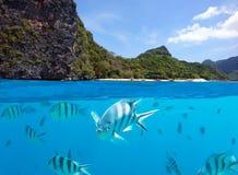 Onderwatervissen en landschap Royalty-vrije Stock Foto