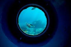 Onderwatervissen in koraalriffen stock foto