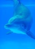 Onderwatervriend Stock Afbeeldingen
