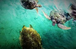 Onderwaterwaarnemingscentrum Marine Park Stock Foto