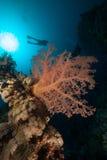 Onderwaterwereld royalty-vrije stock foto's