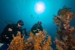 Onderwaterwereld royalty-vrije stock foto