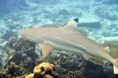Onderwaterwereld de Maldiven Royalty-vrije Stock Foto's
