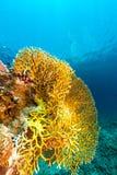 Onderwaterwereld in het Rode Overzees royalty-vrije stock afbeelding