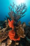 Onderwaterwereld in het Rode Overzees stock foto's