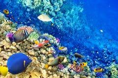 Onderwaterwereld met koralen en tropische vissen Stock Foto's