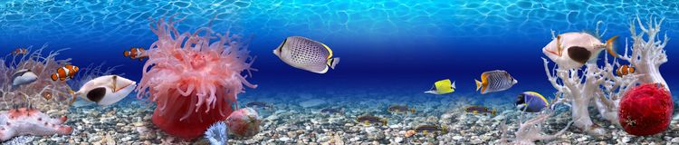 Onderwaterwereld - panorama Stock Afbeelding