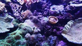 Onderwaterwereld van Overzees, zeewier en koralen stock afbeeldingen