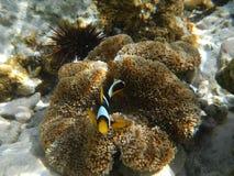 Onderwaterwereld Zanzibar Royalty-vrije Stock Afbeeldingen