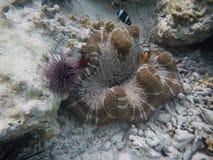 Onderwaterwereld Zanzibar Royalty-vrije Stock Foto