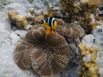Onderwaterwereld Zanzibar Royalty-vrije Stock Afbeelding