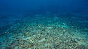 Onderwaterzand met schroot op een ondiepe zeebedding royalty-vrije stock fotografie