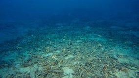 Onderwaterzand met schroot op een ondiepe zeebedding royalty-vrije stock afbeeldingen