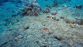 Onderwaterzand met schroot op een ondiepe zeebedding stock foto's