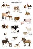 Onderwijs affiche met landbouwbedrijfdier Stock Afbeeldingen