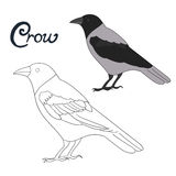 Onderwijsspel het kleuren de vogelvector van de boekkraai Stock Fotografie