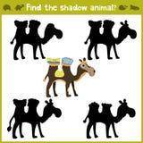 Onderwijsspelen voor kinderen, beeldverhaal voor kinderen van peuterleeftijd Vind de juiste schaduw voor Afrikaanse kameel Vector vector illustratie