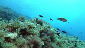 Onderzees landschap - Middellandse Zee ertsader stock videobeelden