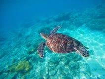 Onderzeese foto met schildpad Zeeschildpad in wilde aard Stock Afbeeldingen