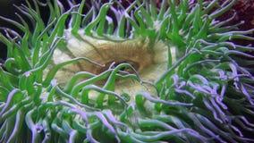 Onderzeese Marine Life stock footage