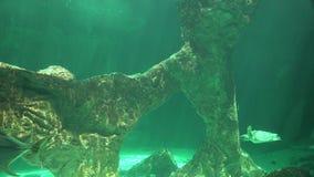 Onderzeese Oceaanbodem en Marine Life stock videobeelden