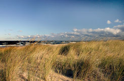 Ondes ambres d'herbe de dune Photos stock