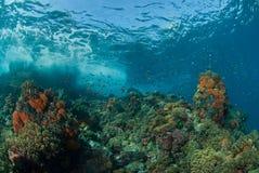 Ondes se cassant sur le corail Photo stock