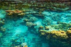 Ondiep koraalrif in turkoois transparant water, Indonesië stock afbeeldingen
