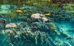 Ondiep koraalrif in turkoois transparant water, Indonesië royalty-vrije stock afbeelding