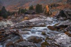 Ondiep Rocky Stream Long Exposure View met Pijnboombomen, Altai-de Aard Autumn Landscape Photo van het Bergenhoogland Stock Afbeeldingen