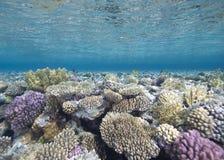 Ondiep tropisch koraalrif stock foto