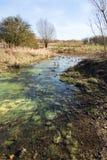 Ondiep water die op moerasland bij het Bos van Alluviale gebieden stromen - verticaal royalty-vrije stock afbeelding