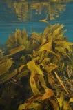 Ondiep waterbos royalty-vrije stock afbeelding