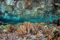 Ondiepe Coral Reef in Raja Ampat Royalty-vrije Stock Foto