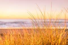 Ondiepe diepte van het landschap van het gebiedsgras met mening van strandkustlijn bij zonsondergang met geel licht Stock Foto's