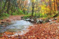 Ondiepe kreek die in herfstbos stromen Stock Afbeeldingen