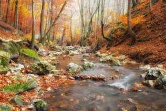 Ondiepe kreek die in herfstbos stromen Stock Afbeelding