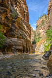 Ondiepe rivier in een smalle canion Zion National Park, Utah, Verenigde Staten Royalty-vrije Stock Foto's