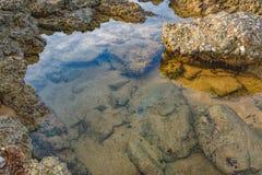 Ondiepte van tropische vissen dichtbij de waterspiegel stock foto's