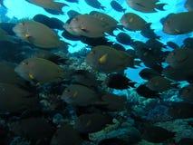 Ondiepte van vissen Stock Foto