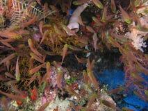 Ondiepte van vissen Stock Fotografie