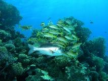 Ondiepte van vissen Stock Foto's