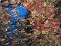Ondiepte van vissen Royalty-vrije Stock Fotografie
