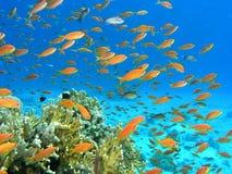 Ondiepte van vissen op de ertsader Royalty-vrije Stock Foto's