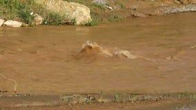 Ondinha pequena no rio video estoque