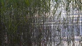 Ondinhas lentas da água através das estações de tratamento de água em uma beira do lago vídeos de arquivo