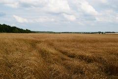 Ondinhas no vento Fotografia de Stock
