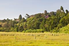 Ondiri Swamp in Kikuyu, Kenya Stock Photo