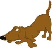 ondsint hund mycket Arkivbild