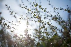 Onduidelijk beeld bokeh groen blad met de achtergrond van de zongloed Stock Afbeeldingen